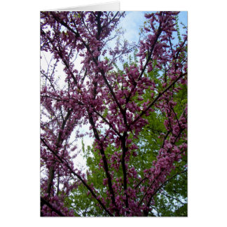 Dramatic Deep Pink Flowering Trees New York City Card