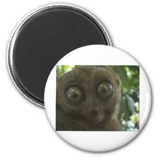 Dramatic Lemur Magnet