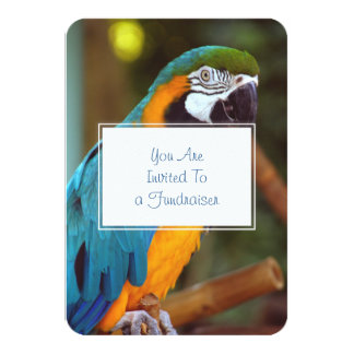 Dramatic Macaw Card
