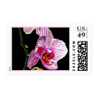 Dramatic Orchid - Postage