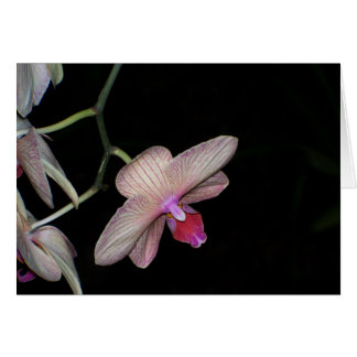 Dramatic Orchids I Card