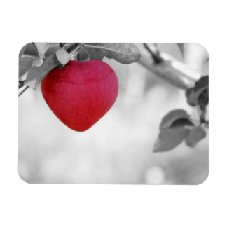 Dramatic Red Heart Shaped Apple Rectangular Photo Magnet