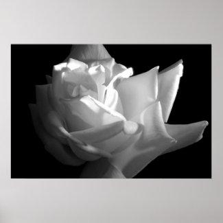 Dramatic Rose Print print