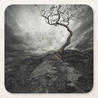 Dramatic sky over old lonely tree square paper coaster
