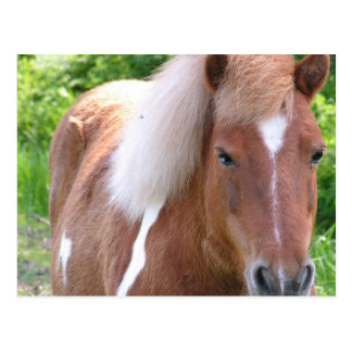 Draught Horse Postcard