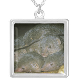 Drawf Mongoose, Helogale undulata), family Silver Plated Necklace