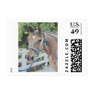 Drawing of a Roan Tennessee Walker Postage