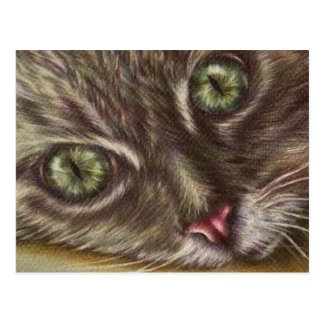 Drawing of Cat Close Up on Postcard