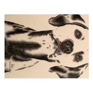Drawing of Dalmatian on Postcard