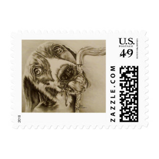 Drawing of Dog Drinking on Stamp