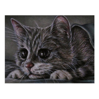 Drawing of Kitten on Postcard