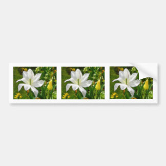 Drawing of white tulip flower bumper sticker