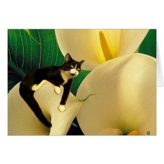Dream Cat Greeting Cards