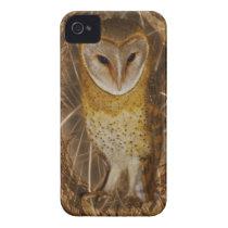 Dream catcher owl iPhone 4 cover