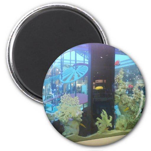 Dream~ de la aguamarina imán para frigorífico