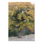 Dream Tree Photo