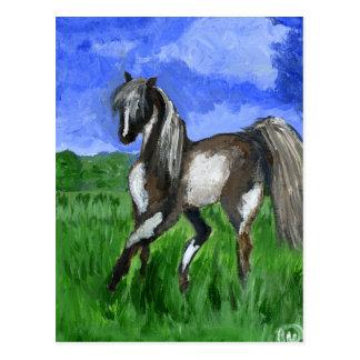 Dreamer pinto horse art postcard