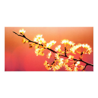 Dreamer, Spring Flowers are blooming Photo Card
