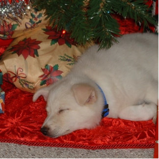 Dreaming of a White Christmas Cut Out