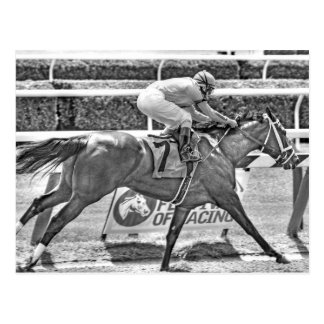Dreaming of Julia- 2 year old filly Champion Postcard