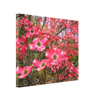 Dreaming of Pink Dogwood Blooms in Spring! Stretched Canvas Print
