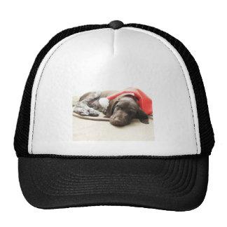 Dreaming of Santa - German Shorthair Puppy Trucker Hat