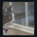 """Dreaming Of Warmer Weather To Go Outside Bandana<br><div class=""""desc"""">Baby, an indoor / outdoor cat, is dreaming of warmer weather so she can go outside. Looking for more prints or products? Feel free to visit my store: http://www.zazzle.com/timelessmomentsphtgy This photo was taken by Jennifer White with Timeless Moments Photography. All images are copyrighted &#169; Timeless Moments Photography/Jennifer White. All rights...</div>"""