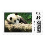 Dreaming Tai Shan Stamps