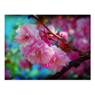 Dreamland, flor de cerezo en Corea Tarjeta Postal