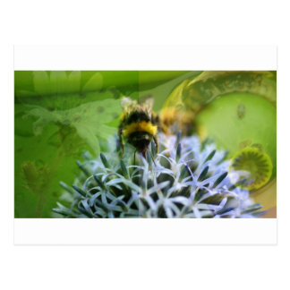 Dreams of the bee postcard