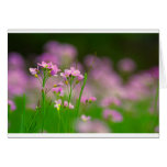 Dreams with nature spa pictures greeting cards