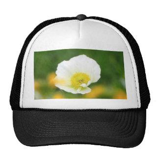 Dreamscape - Iceland Poppy Trucker Hat