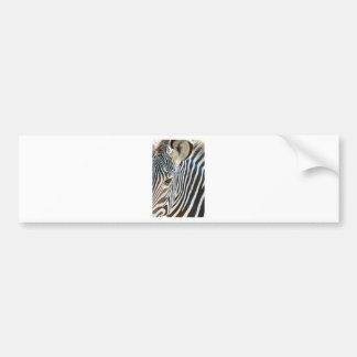 dreamstimefree_3750677-zebra pegatina de parachoque