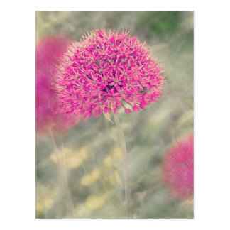 Dreamy Alliums Postcard