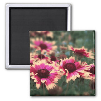 Dreamy Blanket Flowers 2 Inch Square Magnet