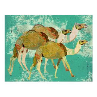 Dreamy Camels  Postcard