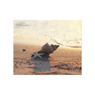 Dreamy country shell still life at the beach canvas print