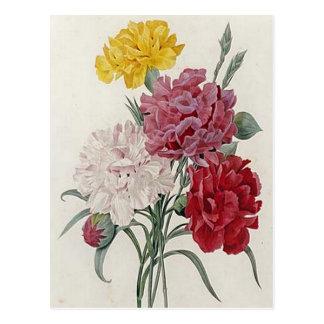 Dreamy Dianthus Postcard