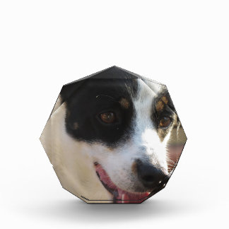 Dreamy dog puppy closeup acrylic award