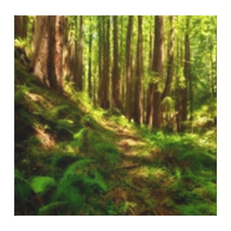 Dreamy Lush California Redwood Forest Canvas Print