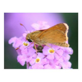 Dreamy Moth Postcard
