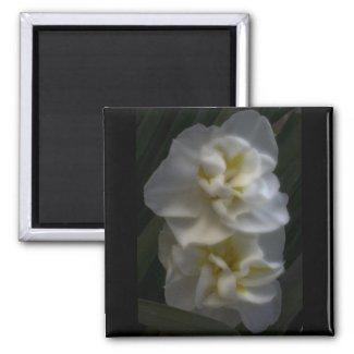 Dreamy Narcissus Daffodils zazzle_magnet