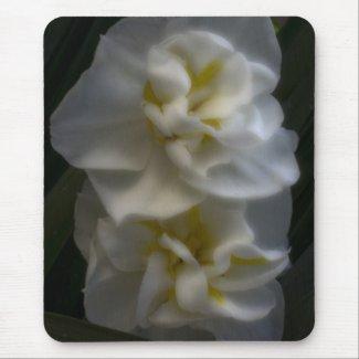 Dreamy Narcissus Daffodils zazzle_mousepad
