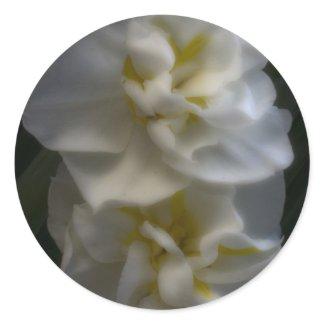 Dreamy Narcissus Daffodils zazzle_sticker