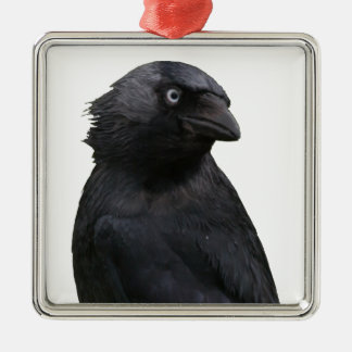 Drenched Jackdaw Metal Ornament