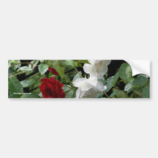 Drenched Roses Flower Photo Bumper Sticker