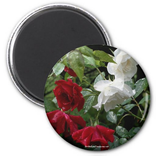 Drenched Roses Flower Photography Magnet