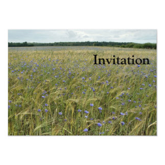 Drenthe - Corn Flower field Card