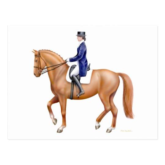 Dressage Horse Postcard