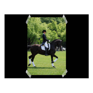 Dressage Horse Show Design Postcard